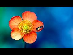 Abraham Hicks 2016 - You are able to turn it around (new) - YouTube
