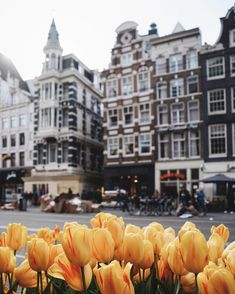 Tulips in Amsterdam.