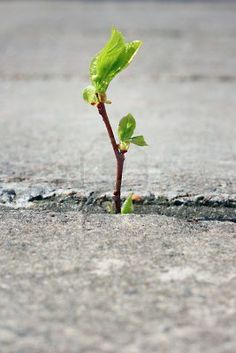 tree growing through crack in pavement Stock Photo - 13528987
