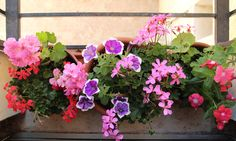 window sill with plant flowers