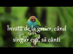 Canti, Youtube, Animation, Thoughts, Words, Gifs, Instagram, Animation Movies, Presents