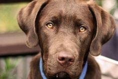 Pet Expo Washington State Convention Center Seattle, WA #Kids #Events
