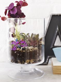 Terrariums with Little People