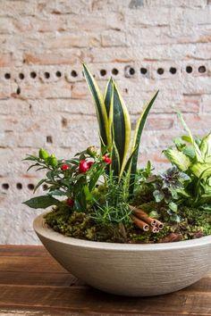 23 Clever DIY Christmas Decoration Ideas By Crafty Panda Dish Garden, Vegetable Garden, Elephant Ear Plant, Modern Flower Arrangements, Miniature Plants, Succulents Diy, Backyard Landscaping, Houseplants, Container Gardening