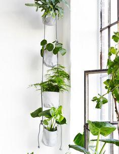 plante pot plantes verdure idée intérieur trimm