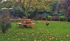 Sussex-Hühner in Tarn-Farben des Herbst-Gartens
