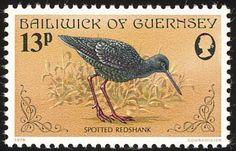 Známky: Spotted Redshank (Tringa erythropus) (Guernsey) (Birds) Mi:GG 168,Sn:GG 168,Yt:GG 163,Sg:GG 172,AFA:GG 161