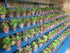 After days of heavy rain and strong winds we had forgotten what it's like to feel the sun shine down and warm you up. But the sun made a welcome appearance yesterday so a trip to our beautifu… Primula Auricula, Strong Wind, Beautiful Gardens, Amazing, Flowers, Sun Shine, Theatres, Garden Ideas, Rain