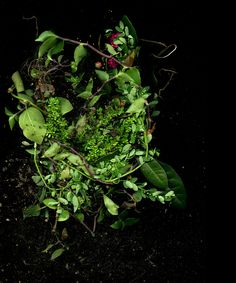 In Search of Home — Kija Lucas