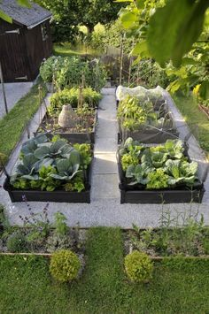 beautiful kitchen garden - black raised beds, gravel and concrete pavers, plant supports