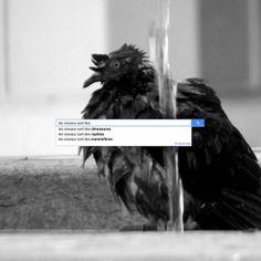 Les oiseaux sont... | Flickr: partage de photos!