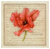 Pink Parrot Tulip  Vincent Jeannerot