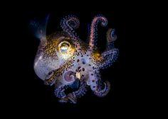 Underwater Photography – Todd Bretl   The Dancing Rest