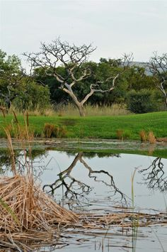 Zebula, South Africa Golf Estate, Natural Contour, Natural Wonders, Croatia, South Africa, Spa, Trees, African, Water