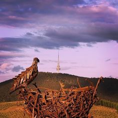 """""""Sunset from the top of Dairy Farmers Hill, where the big bird's nest overlooks Black Mountain and the Telstra Tower."""" We always love seeing photos of the National Arboretum Canberra, especially when they are as nice as this photo by Instagrammer @prashanthyy. #visitcanberra"""