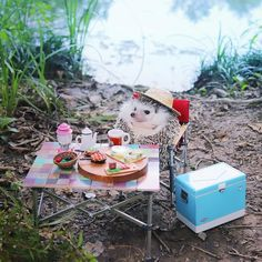 Dog Names Discover Pygmy Hedgehog Packs His Tiny Bags and Goes Camping in Adorable Photo Shoot Azuki Tiny Hedgehog Goes Camping.Pygmy Hedgehog Packs His Tiny Bags and Goes Camping in Adorable Photo Shoot Super Cute Animals, Cute Little Animals, Cute Funny Animals, Pygmy Hedgehog, Cute Hedgehog, Hedgehog Animal, Jolie Photo, Go Camping, Camping Bags