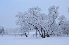 Stunning winter freeze