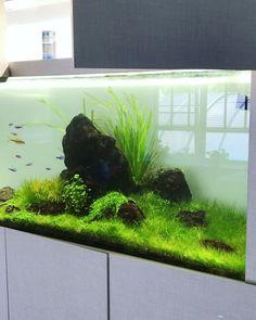 """285 Likes, 1 Comments - Nikolay Mazur (@aquaproject.ua) on Instagram: """"#aquaproject #aquarium #aquascape"""""""