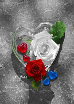 💖💥🌼💗🌸 🌻 Splash of Colour 🌻🌹💗🌺💥💙 Heart Pictures, Love Pictures, Heart Pics, Beautiful Flowers Wallpapers, Beautiful Roses, Purple Roses, White Roses, Romantic Valentines Day Ideas, Splash Images