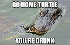 Go home Turtle,  you're drunk.