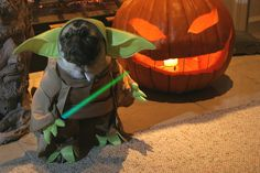 Happy Halloween from Yoda & his pumpkin pal.