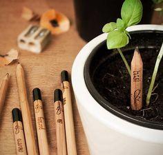 Lápices+sustentables+que+se+convierten+en+plantas Más