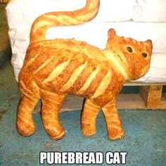 Laugh your self out with various memes that we collected around the internet. Funny Cute Cats, Funny Animals, Cute Animals, Crazy Cat Lady, Crazy Cats, Best Funny Pictures, Funny Images, Cat Bread, Bread Art