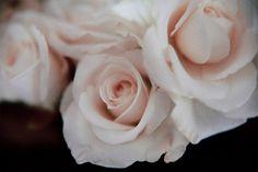 White roses up close, via Hawaiian Coconut