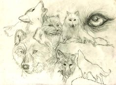 Drawn collage of wolves.