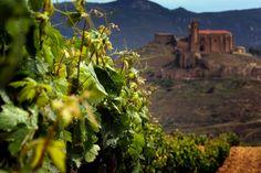 Gran foto de viñedos de Rioja, en la zona de San Vicente de la Sonsierra (Justo Rodriguez)