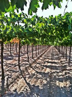 CA Raisin Harvest Tour in Fresno, CA