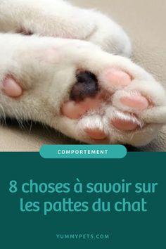 Bien Entendu, Son Chat, Quelque Chose, Info, Pets, Prince, Animals, Cat Health, All About Cats