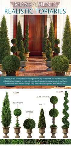 6 Tips to Selecting the Right Topiary - Improvements Blog
