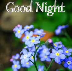 Good Night Images with flowers and nature - PIX Trends Good Night To You, Photos Of Good Night, Beautiful Good Night Images, Good Night Sweet Dreams, Good Morning Images, Happy Akshaya Tritiya Images, Happy Diwali Images, Happy Karwa Chauth Images, Sweet Dreams Images
