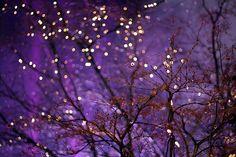 plum-violet