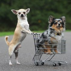 Going to the supermarket with your mom & secretly putting a snack into the cart without her knowing.