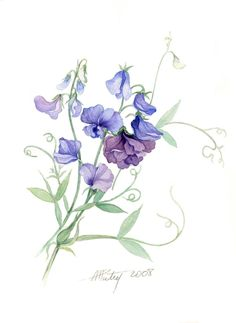 Lovely watercolour art from Anne Marie Patry-Belluteau - botanical painting of sweetpeas. Watercolor Drawing, Watercolor Cards, Watercolor Flowers, Painting & Drawing, Watercolor Paintings, Watercolors, Sweet Pea Tattoo, Botanical Drawings, Botanical Prints