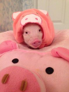 pig IN a pig ON a pig