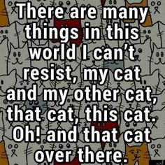 Funny Animal Quotes, Cat Quotes, Cute Funny Animals, Funny Cats, Funny Quotes, Crazy Cat Lady, Crazy Cats, I Love Cats, Cool Cats