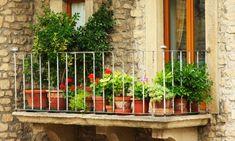 Plantas de temporada otoño-invierno para terraza y balcón - Hogarutil