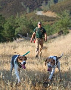 Last Wednesday, Governor Jerry Brown of California signed a bill banning the use of dogs to hunt bears and bobcats. The bill will take effect on January 1st, 2013. This is just one of many animal welfare bills Governor Brown has signed this year. Many of the bills have received bipartisan support. This most recent bill had opposition from the hunting community and many Republicans.