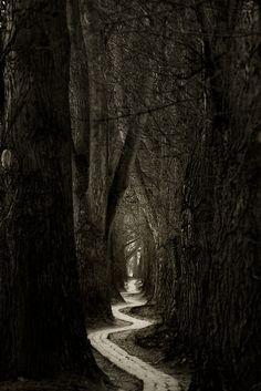 This path looks like something from a fairy tale