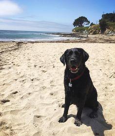 Santa Cruz CA: Celebrating Louie's 4th birthday at the beach today!  by thebitesizedbaker
