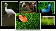 A pure CSS3 responsive image gallery with zoom effect. No JavaScript or jQuery used. Perfect for showcasing your photos.