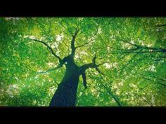 Meditação: controle sua mente e livre-se dos maus pensamentos/ Emanuel Veiga - YouTube