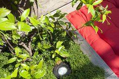 Des spots halogènes sont discrètement placés dans les jardinières