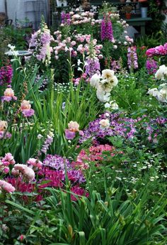 """I went to my mom's house today to look at her garden. It looks lovely, so I took some photos to share with you. The pink rose is Guy de Maupassant, the white is Perdita, the small pink is Our Lady of Guadaloupe, the big flowered dark pink is Yves Piaget. The iris is Sweet Musette, and the other flowers are foxgloves, alstroemerias, and columbines."" Photo and text by hosenemesis on gardenweb, southern California, May 15, 2011"