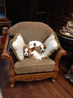 Love these dogs - King Charles Cavalier Spaniels.two is always better than one! King Charles Puppy, Cavalier King Charles Dog, King Charles Spaniel, Animals And Pets, Cute Animals, Cavalier Rescue, Dog Cookies, Fluffy Pillows, Puppy Mills