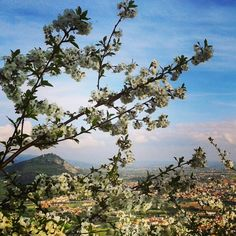 #cherry #tweegram #tree #blue