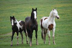 Revolution Sport Horses | GALLERY